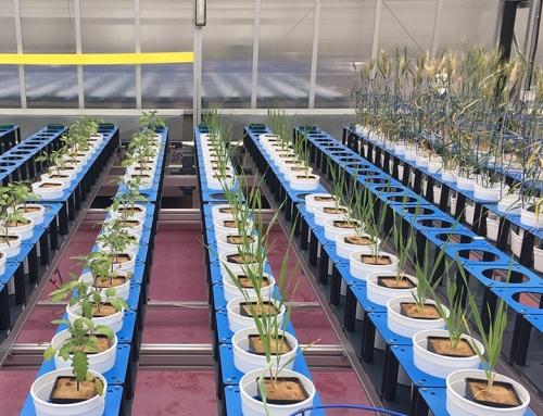 'Depressed' plants