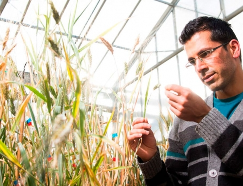 The hunt for combined drought and heat tolerant crops