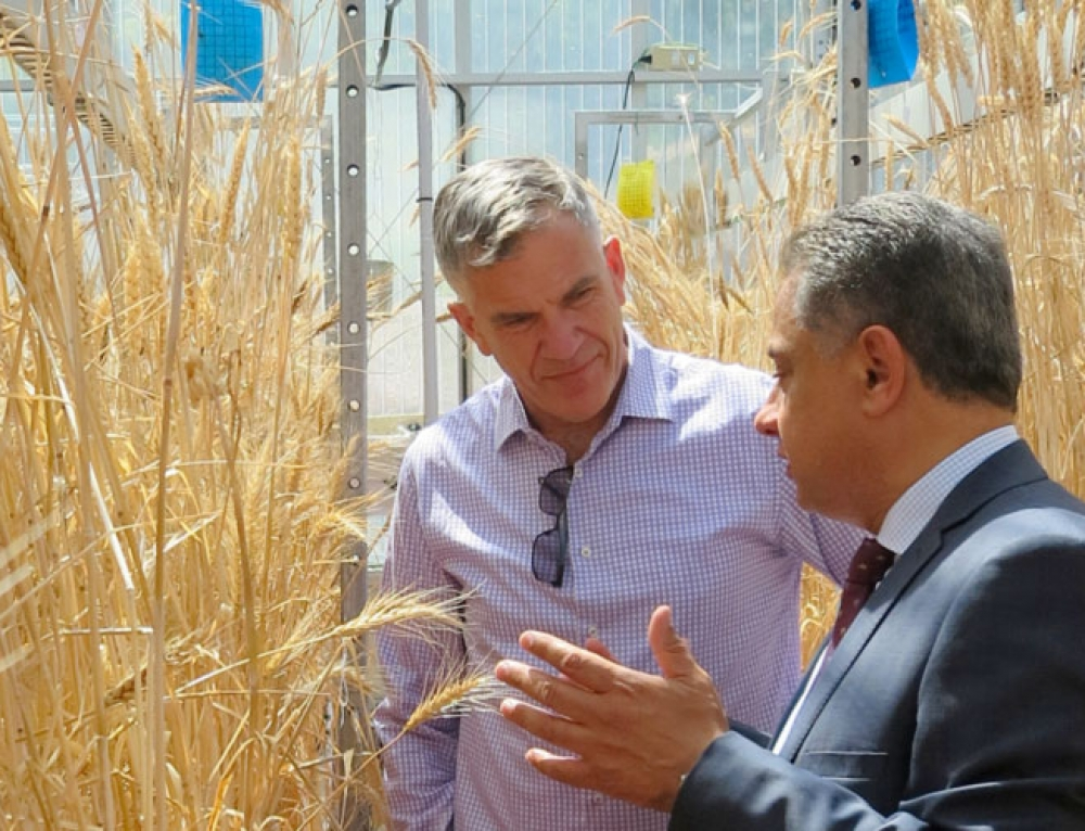 China taps into Australian plant phenomics expertise